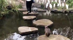 chien qui chute dans l'eau