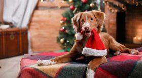 des chiots reçus en cadeau à Noël déjà en vente en ligne