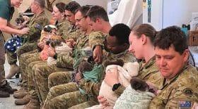 incendie-en-australie-des-soldats-en-permission-en-profitent-pour-aller-nourrir-les-koalas
