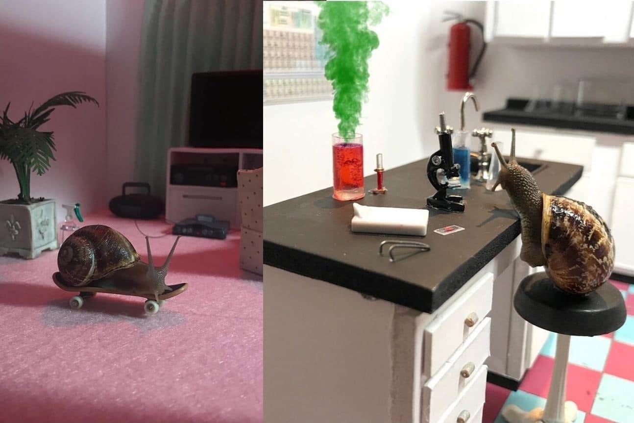 Deux artistes créent un monde miniature pour leurs escargots domestiques