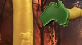 Un sextoy avec un koala pour lutter contre les incendies