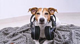 spotify playlist animaux compagnie