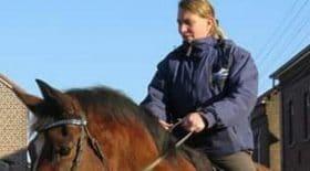 un-cheval-meurt-dune-crise-cardiaque-a-cause-des-feux-dartifice-du-nouvel-an