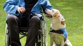 un homme paralysé refoulé avec sa chienne d'un fast food
