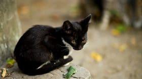 Une chatte sauvée par un homme