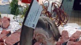 intermarche-propose-une-espece-de-requin-menacee-a-la-vente
