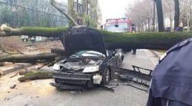 paris-un-arbre-secrase-sur-une-voiture-et-tue-le-conducteur