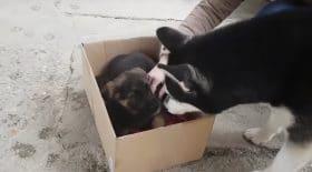 Une rencontre magique entre deux chiens