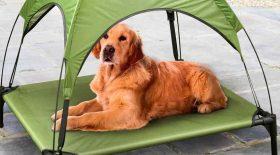 abri chien soleil