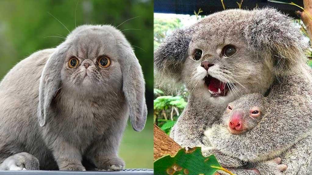 Une graphiste crée des animaux hybrides: et si tous les animaux avaient des têtes de chats