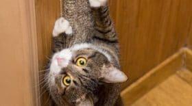 ce-chat-gratte-le-papier-peint-et-fait-une-incroyable-decouverte