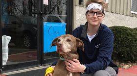 chien ginger adopté refuge