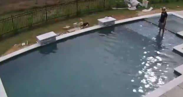 Ce chien se suicide… dans une piscine ! (Vidéo)