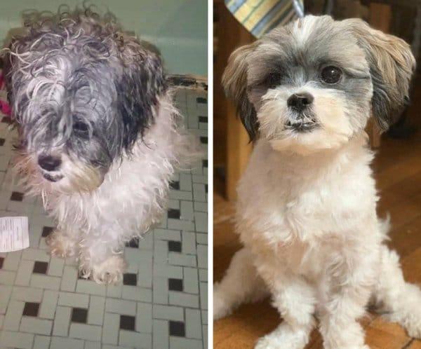 35 photos d'animaux avant et après leur adoption : la différence est flagrante !