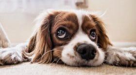 le-nez-des-chiens-cachent-un-secret-incroyable