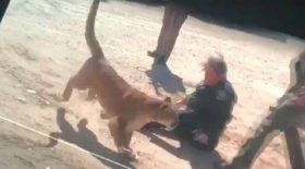 lion attaque policière