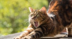 chat-tombe-balcon