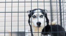 Le confinement empêche la SPA de sauver des animaux