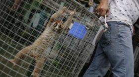 trafic animaux coronavirus