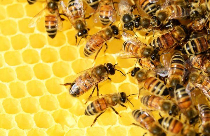 abeilles confinement