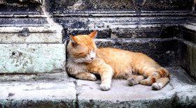 chat eau enfant vengeance