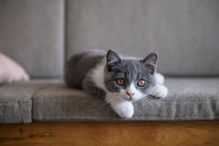 chat premier cas coronavirus france