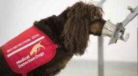 dresser chien odeur covid-19