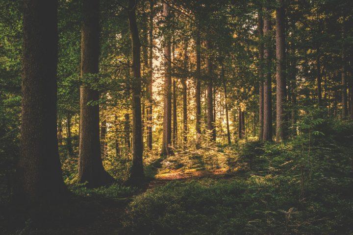 Déconfinement : réouverture des forêts