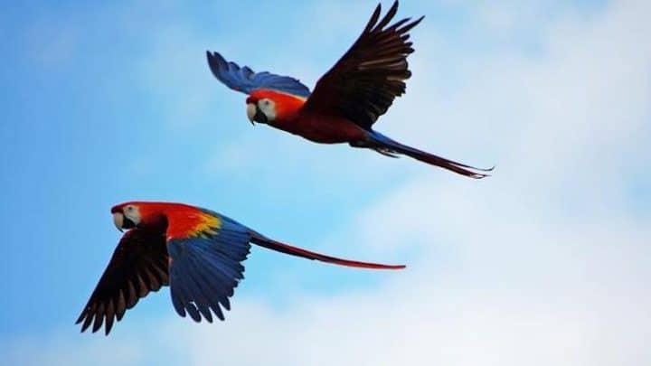 oiseau tombe ciel virus