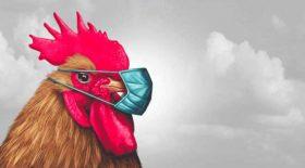 poule agressive terrorise clients banque
