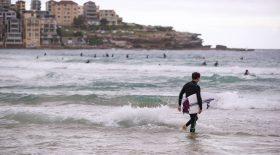 surfeur australie requin attaque