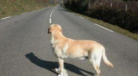 SPA animaux abandonnés abandon campagne sensibilisation