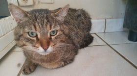 elle-adopte-un-chat-dans-un-refuge-mais-le-ramene-en-moins-de-24-heures