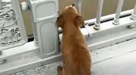 lhistoire-de-ce-chien-qui-attend-son-maitre-pendant-quatre-jours-sur-un-tronc-fait-pleurer-des-millions