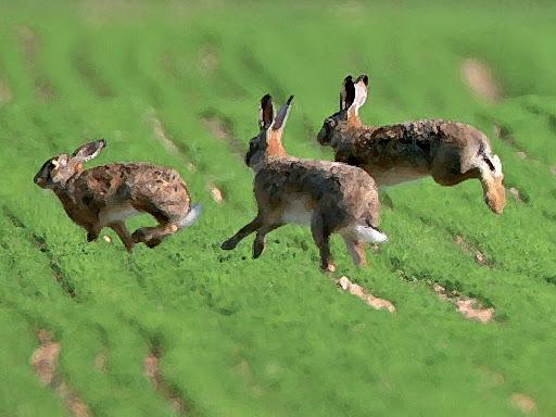 Bélier, lièvre, singe, connaissez vous le nom des femelles de ces animaux ?