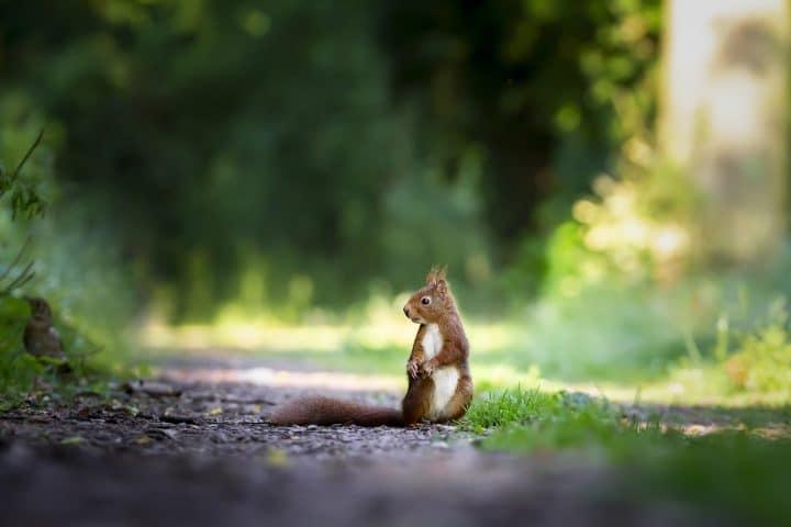 L'énigme de l'écureuil