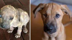 Ces clichés de chiens avant et après adoption risquent de vous faire fondre