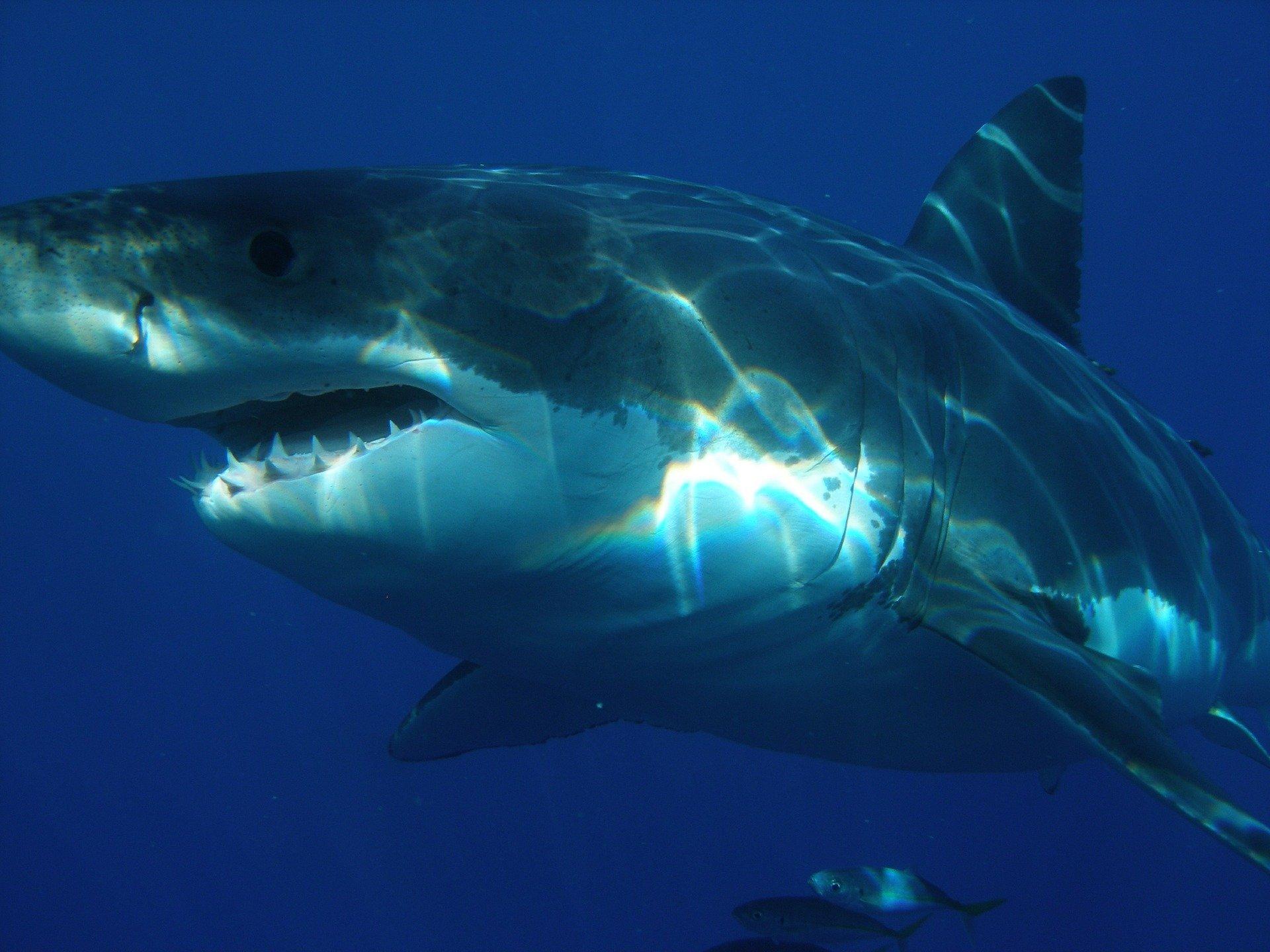 Choc : un père et son fils se font violemment attaquer par un grand requin blanc (VIDEO) !