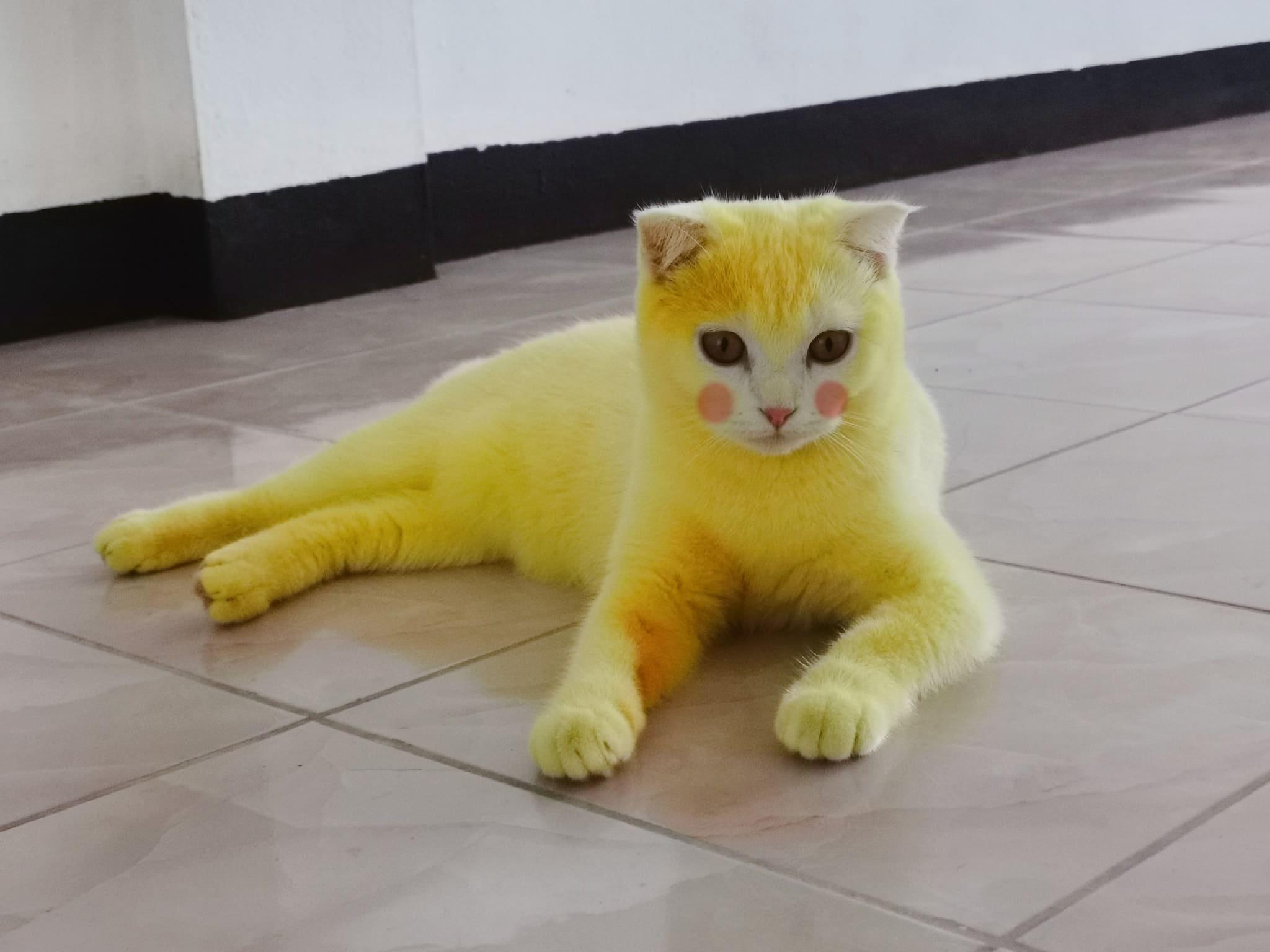 Une femme transforme son chat en Pikachu à cause d'un produit très spécial ! (vidéo)