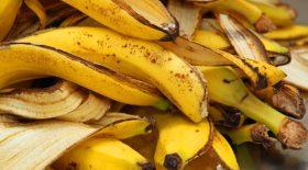 Découvrez les bienfaits des pelures de bananes