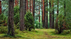 Des produits Carrefour retrouvés en forêt
