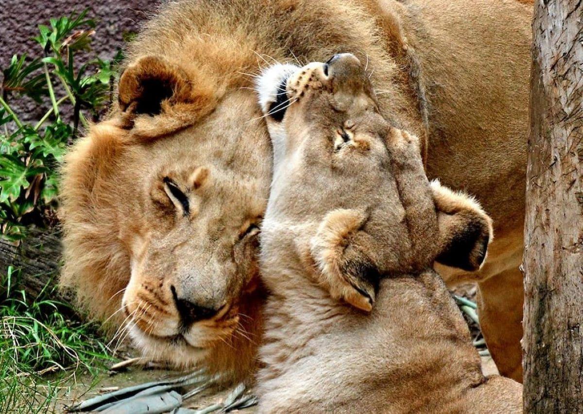 Lions.De