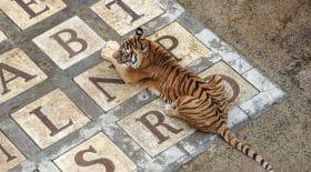 les-tigres-de-fort-boyard-seraient-sous-calmants-tweet-choc-qui-fait-polemique