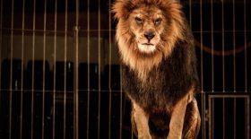 La présentation d'animaux sauvages bientôt interdite dans les cirques itinérants