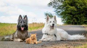 Deux chiens et un chat sont les meilleurs amis du monde