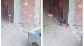 Un chat vole à son secours alors qu'il se fait attaquer par un chien