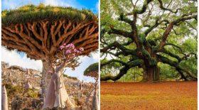 Ces 17 arbres sont hors du commun!