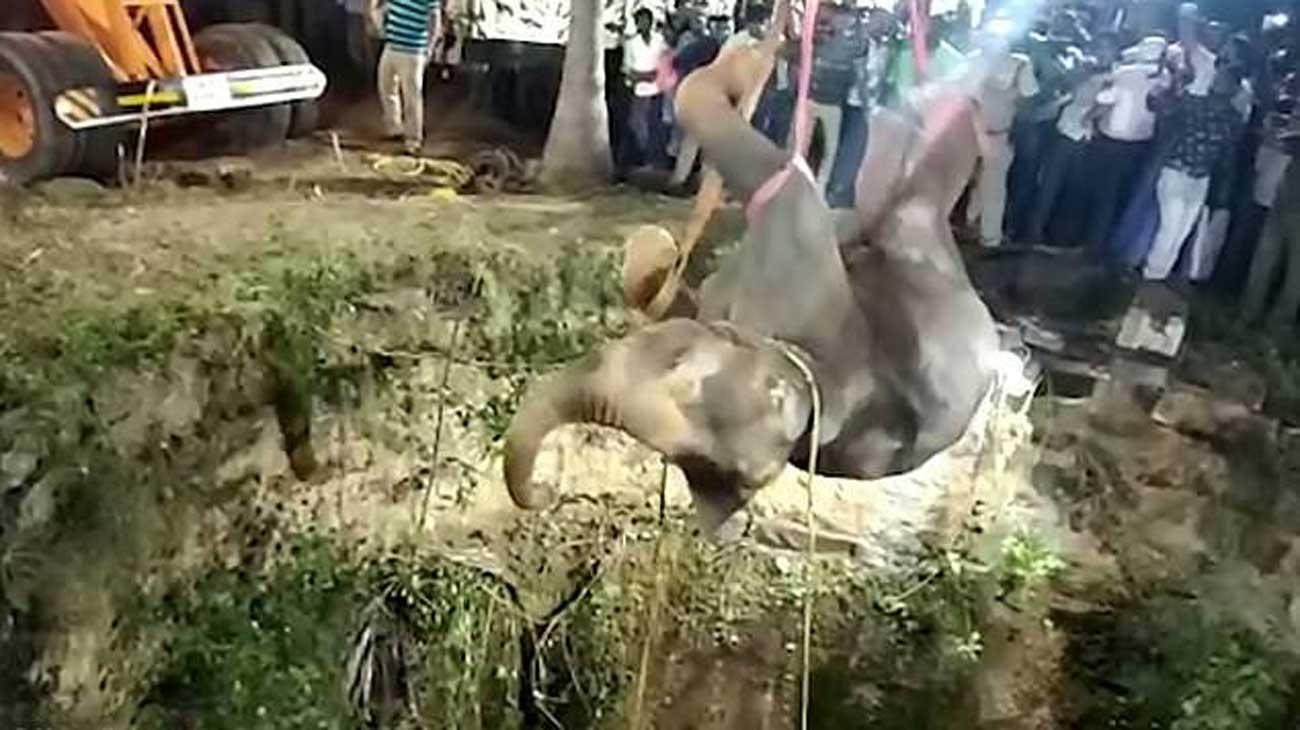 Un éléphant est treuillé hors d'un puits après une chute