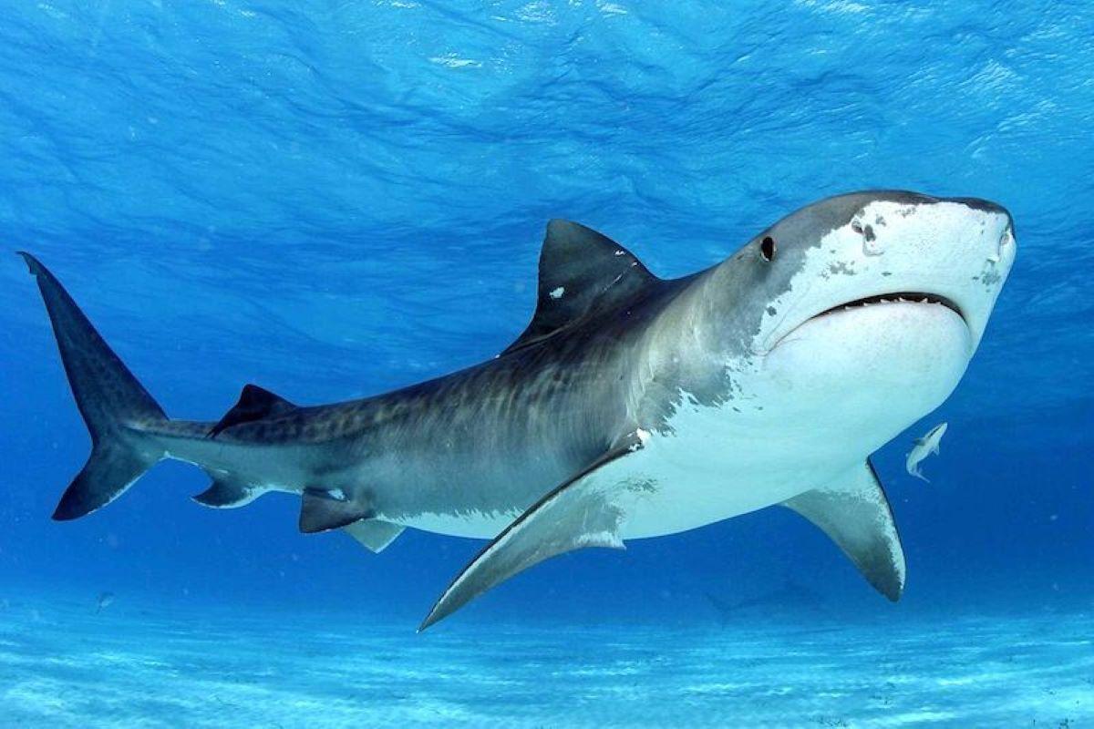 Alors qu'elle explorait les fonds marins, elle se fait mordre la jambe par un requin!