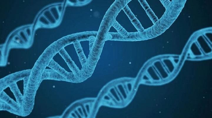 les-scientifiques-parviennent-a-creer-des-hybrides-hommes-moutons-laboratoire